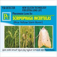 Pheromone Lures For Scirpophaga Incertulas