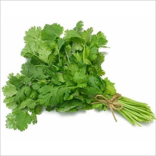 FreshCoriander Leaves
