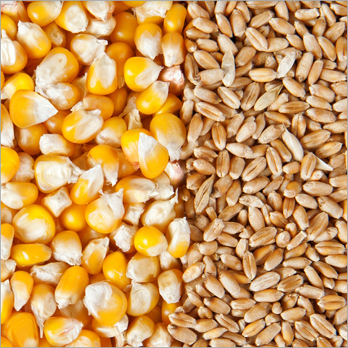 Maize Certifications: Iso