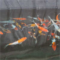 Polythene Film For Fish Breeding