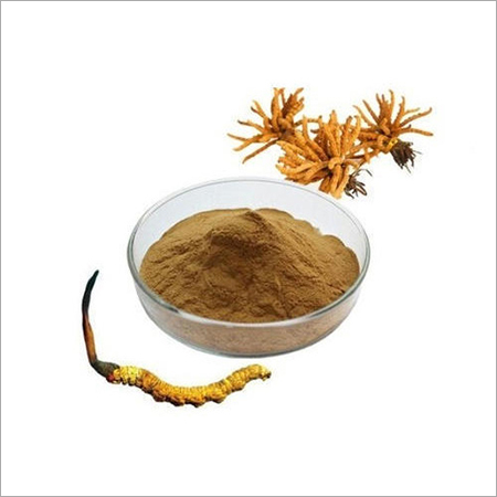 Cordyceps Extract Powder