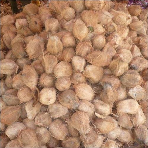 成熟半剥壳的椰子
