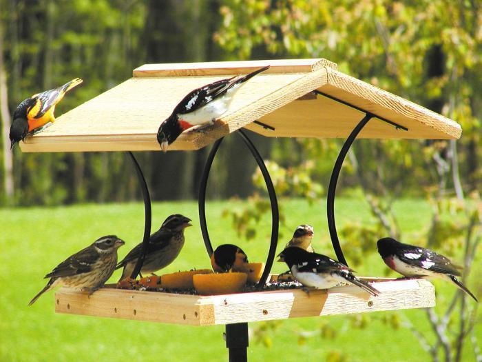 Iron Bird Feeder