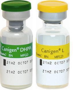 Canigen Dhppil 1ml