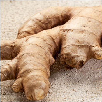 Ginger Oleoresin Extract