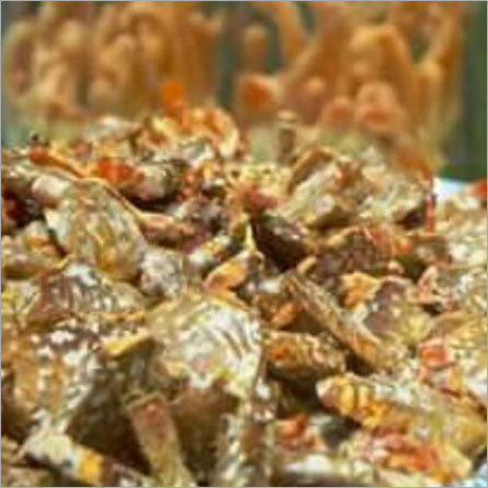 Cordyceps Mycelium