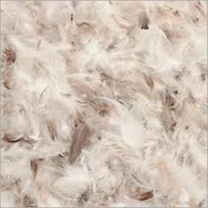 Raw Duck Feather