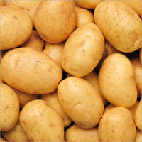 Brown Oval Potato