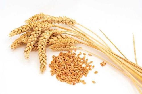 Seeds,Nuts & Grains
