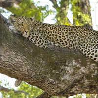 野生生物游览服务
