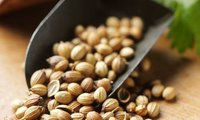 Superior Quality Coriander Seeds from Kinal