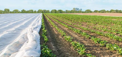 Agriculture non woven fabric