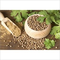 APEDA Certified Superior Quality Coriander Seeds
