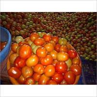 High Quality Fresh Tomato