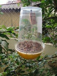 Fruit Fly Lure/Peach Fruit Fly Lure/Bactrocera Zonata Pheromone