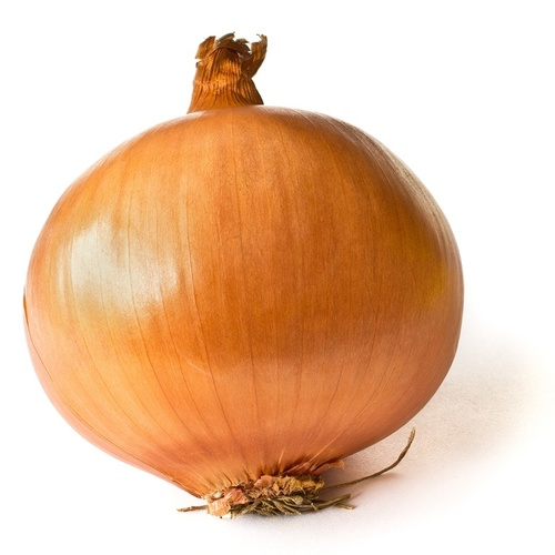 Brown Onion