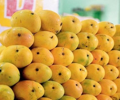 Ratnagiri Mangoes Suppliers, Ratnagiri Aam Exporters, Manufacturers