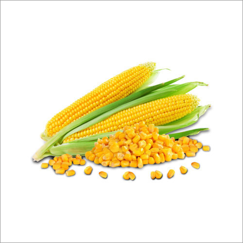 Frozen Sweet corn
