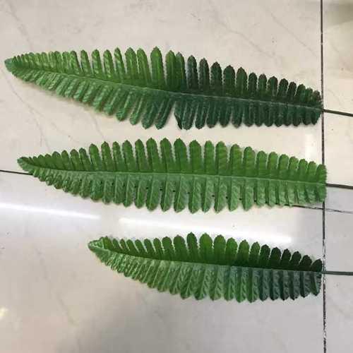 Ghoda palm