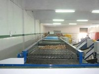 ALL type VEGETABLE GRADING LINE