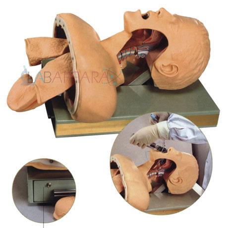 Human Airway Intubation Simulator