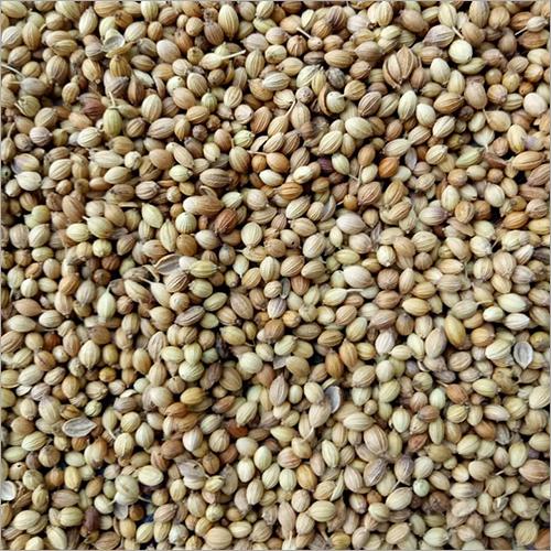 Raw Coriander Seed