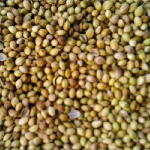 Bulk Coriander Seed