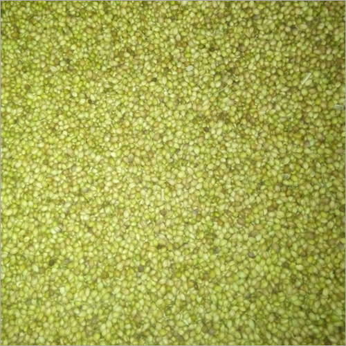 Green Coriander Seed