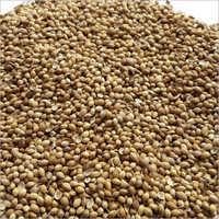 Pure Coriander Seed