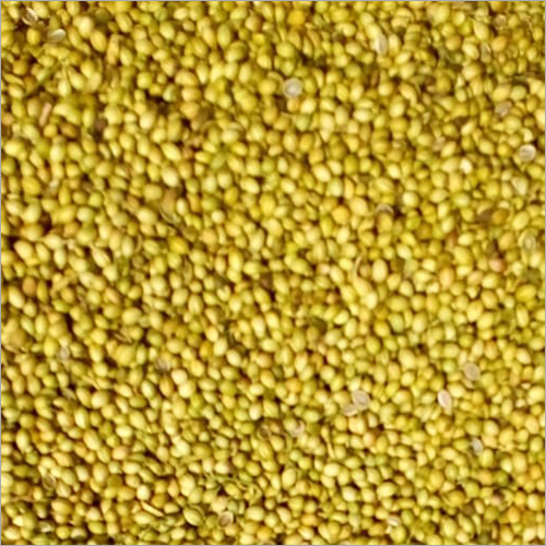 Yellow Dried Coriander Seed