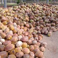 Fresh Husked Coconut