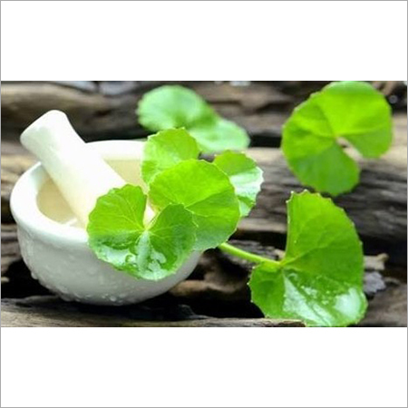 Bramhi Centella Extract Oil