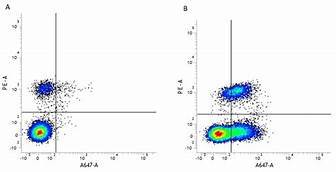 CD54 Monoclonal Antibody(AF647 Conjugated)[15.2]