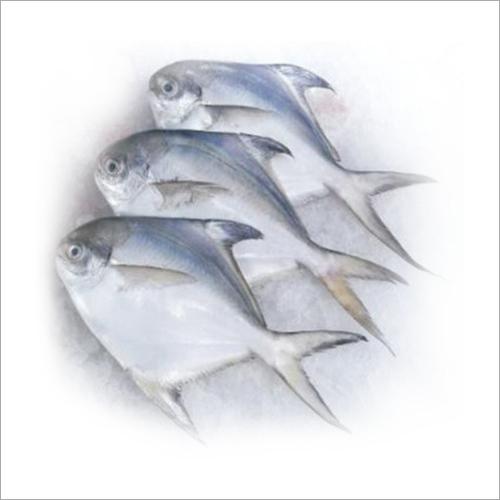 Sea Fish Fresh