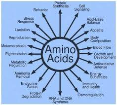 Amino Acid Therapy