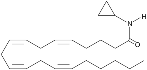 Arachidonoyl Cyclopropylamide
