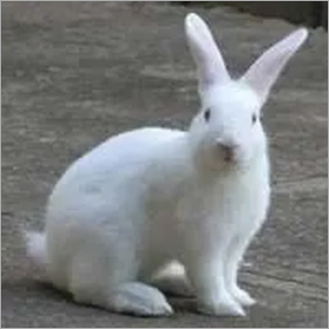 Breeding and Lactating Rabbit Feed