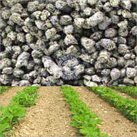 Phosphorus Rich Manure