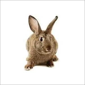 Angora Rabbit Feed