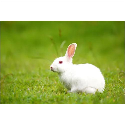 Pet Rabbit Feed