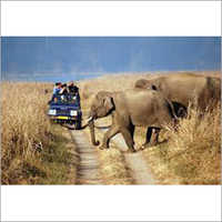 Rajasthan Wildlife Tours