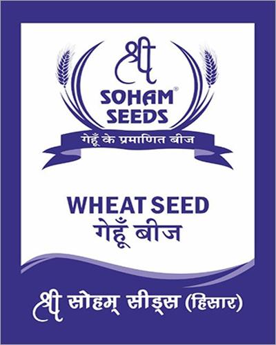 Wheat Grain Seed