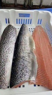 Salmon Fish, Atlantic Mackerel, Salmon Fillet,