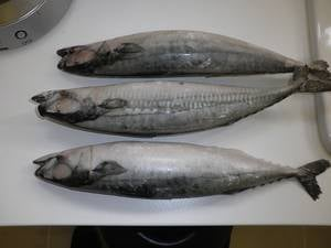Fresh Frozen Salmon Fish Salmon Head