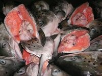 Frozen Norwegian Salmon Fish and head