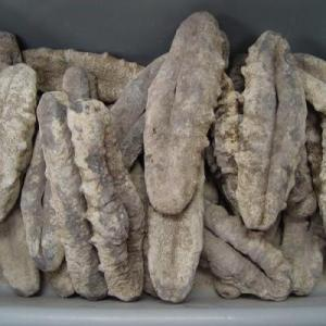 High Quality Dried Wild Sea Cucumber for Sale