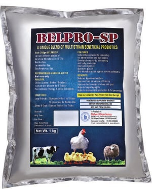 Probiotic Belpro-Sp WS for poultry dairy and aqua