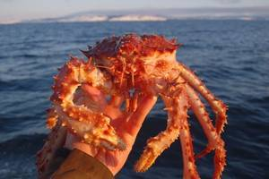 Frozen Red King Crab for Sale