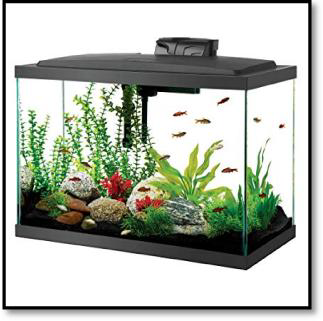 Luminous Frame and Dissection Tank