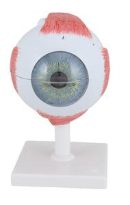 Demonable Eye Model